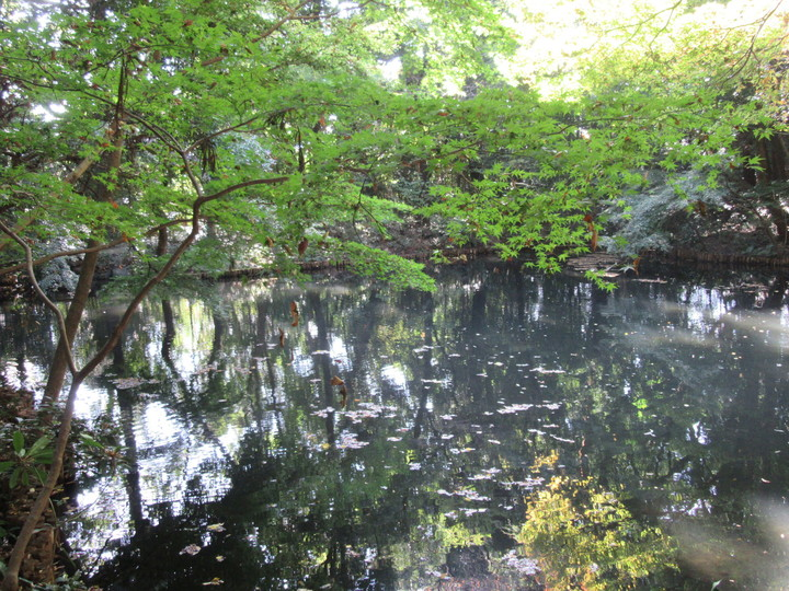 滄浪泉園内にある湧水池.JPG
